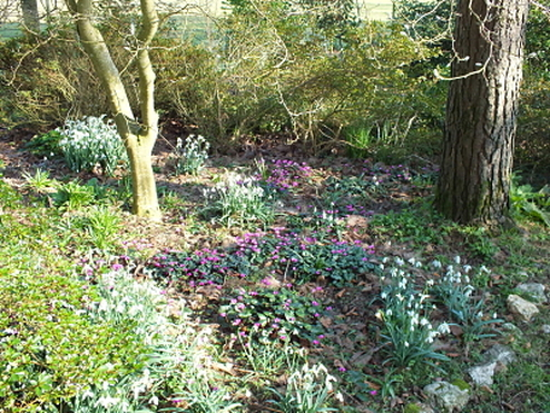 Spring bulbs at Tregoose garden, Cornwall, England